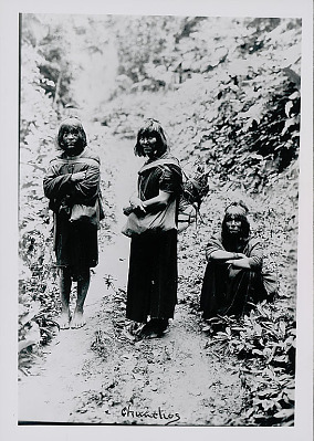 Three Amahuaca Men Wearing Face Paint and in Costume, Carrying Burden Bags on Jungle Path JUL 1910
