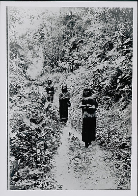Three Amahuaca Men with Burden Bags on Jungle Path July 1910