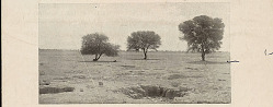 Last Outpost of Acacia Trees Near Water Holes in Desert 1903