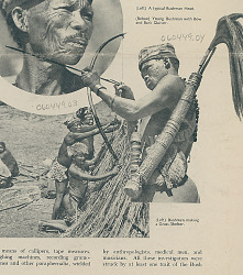 Young Bushman with Bow, Arrow, and Bark Quiver Containing Arrow and Switch SEP 1936