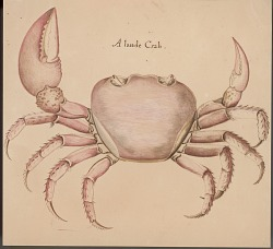 """A Lande Crab"" 1889 Painting/Photomechanical"