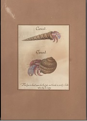 """""""Caracol""""/Crustaceans (Two Depictions) 1889 Painting/Photomechanical"""