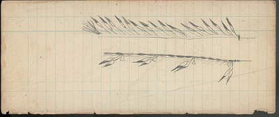 Anonymous drawing, probably Cheyenne, of two feathered lances, n.d