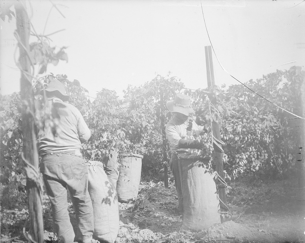 images for Two Men Picking Hops 1889