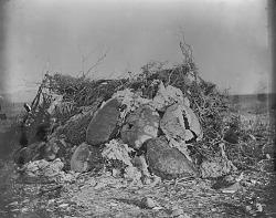 [Turtle shells against brush house] 1895