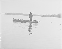 [Tom Hill setting out decoys on Forge River] November 14, 1909