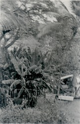 [Trees under which children played Candomblé], 1938 October 9