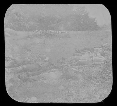 Confederate Dead in Wheat Field, Gettysburg
