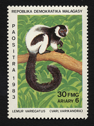 30fr Lemur Variegatus single
