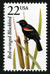 22c Red-winged Blackbird single