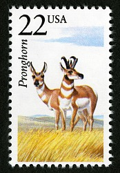 22c Pronghorn Antelope single