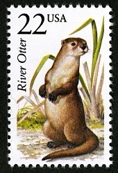 22c River Otter single