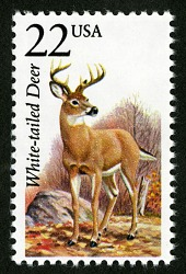 22c White-tailed Deer single