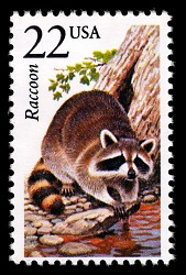 22c Raccoon single