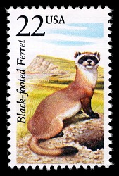 22c Black-footed Ferret single