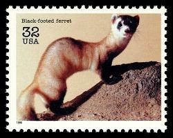 32c Black-footed Ferret single