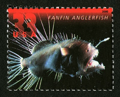33c Fanfin Anglerfish single