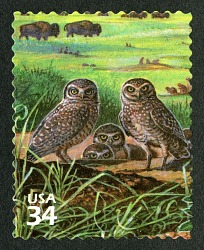 34c Burrowing Owls and American Buffalos single