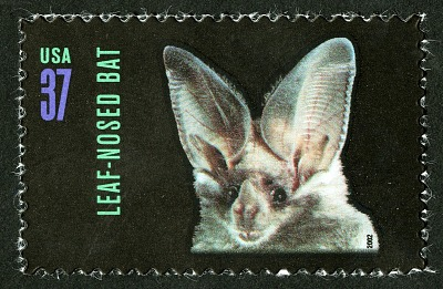 37c Leaf-nosed Bat single