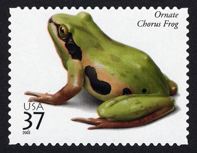 37c Ornate Chorus Frog single