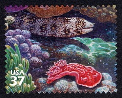 37c Snowflake Moray Eel and Spanish Dancer single