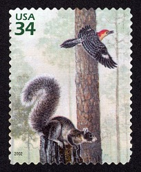 34c Fox Squirrel and Red-bellied Woodpecker single