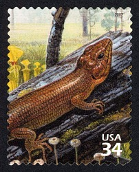 34c Brownhead Skink and Yellow Pitcher Plants single