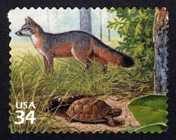 34c Gray Fox and Gopher Tortoise single