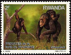 2f Primates, Nyungwe Forest single