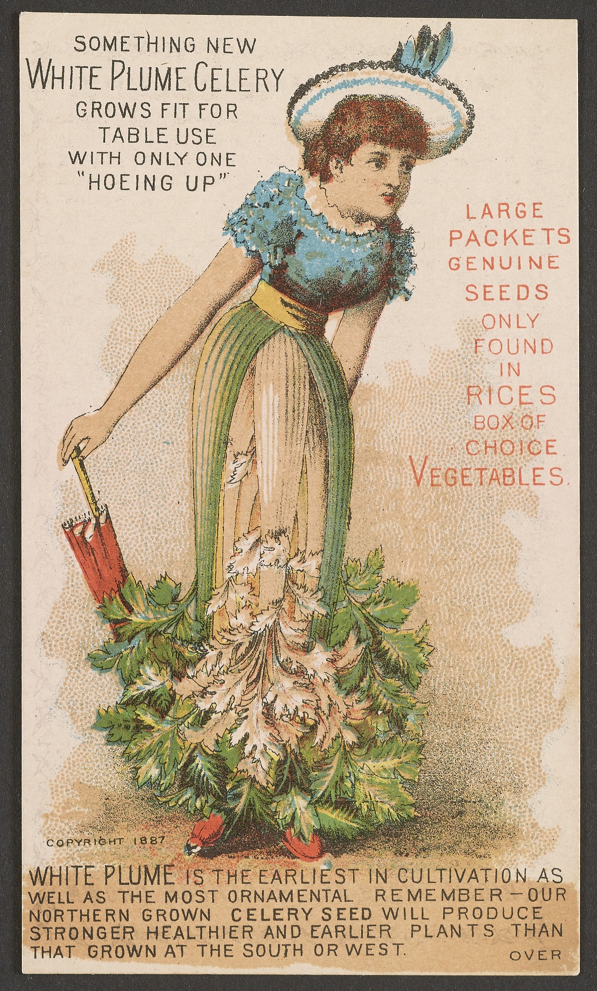 Celery Lady, Trade card, John B. Varick Co., Manchester, New Hampshire, 1885