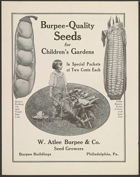 List of seeds for children's gardens, 1917