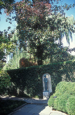 [Gray Garden] [slide (photograph)]: view of sculpture of a woman in front of ivy-covered wall, with willow and magnolia trees above and behind her