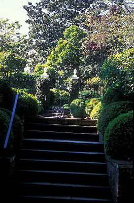 [Gray Garden] [slide (photograph)]: view of stairs leading to middle/primary terrace; fountain spray and upper stairs (heading to upper terrace) are visible