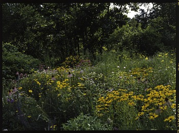Prairie garden, Archives of American Gardens