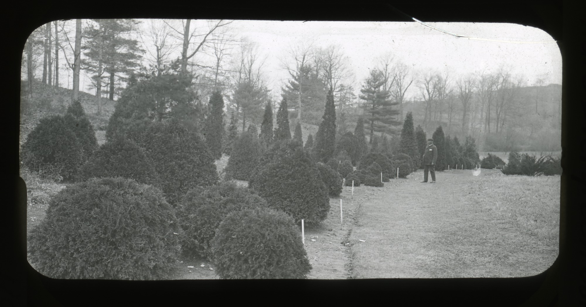 Tree collection at Arnold Arboretum, Jamaica Plain, Massachusetts