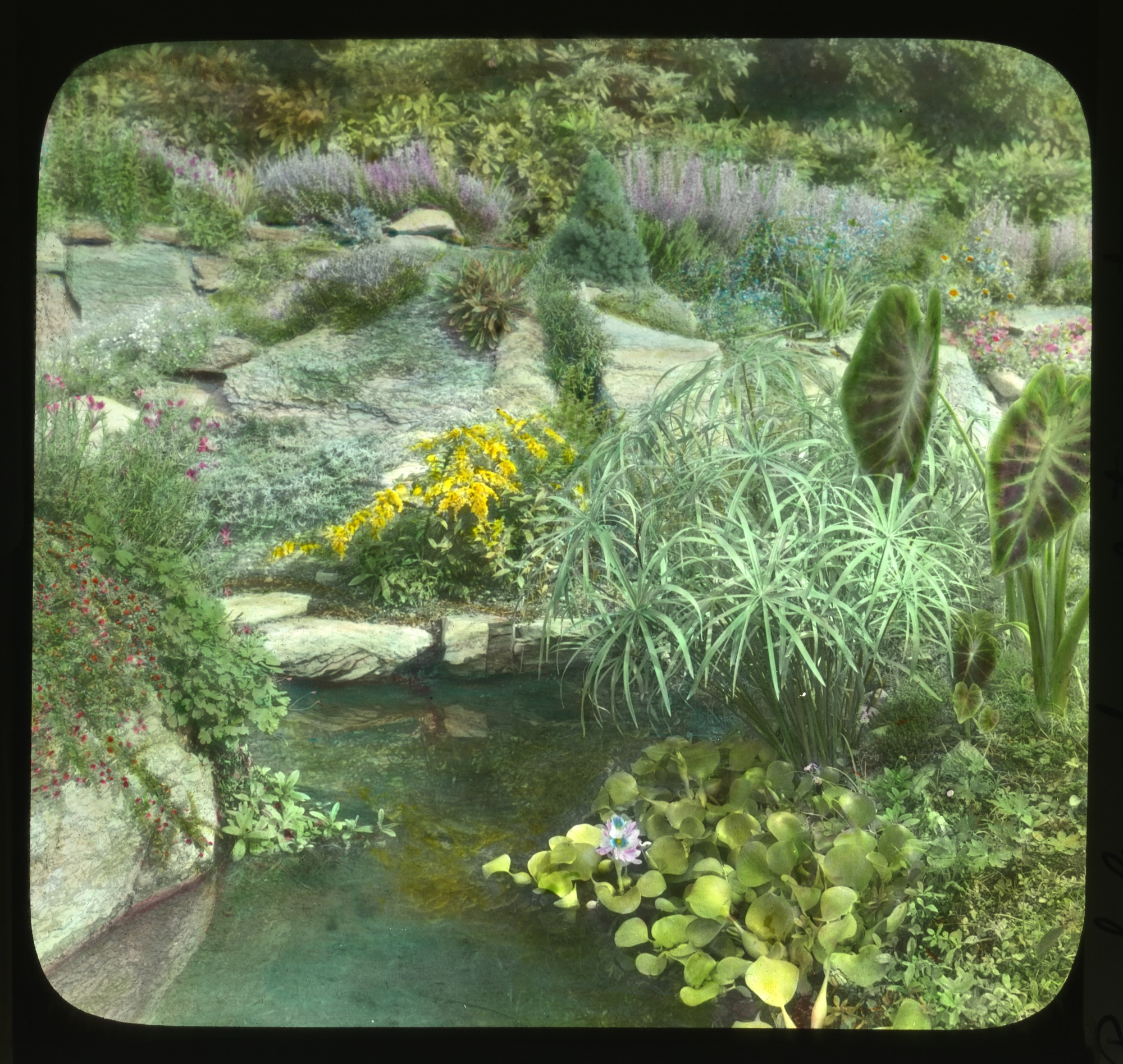 images for Unidentified Garden in Unknown Location slide
