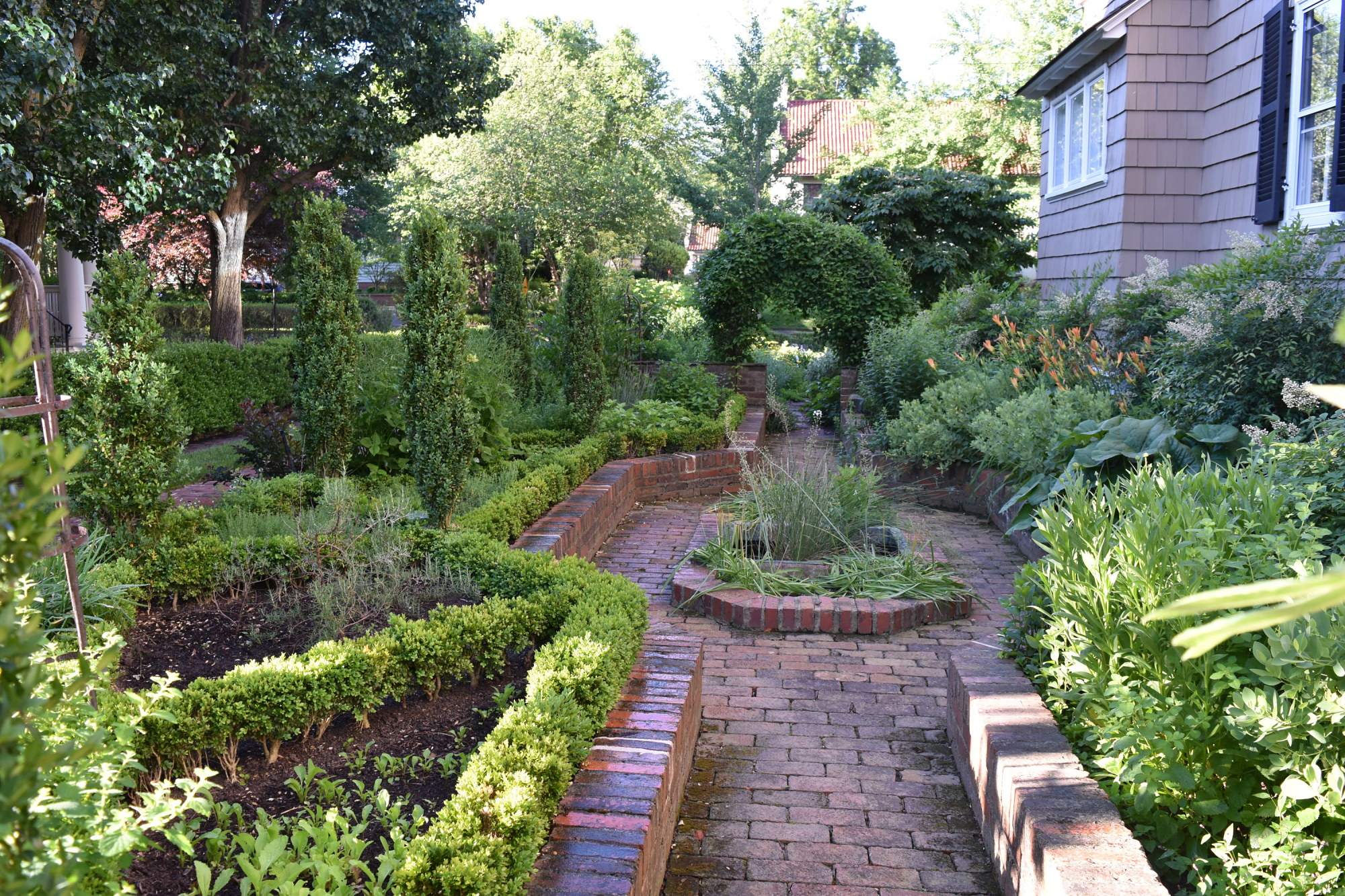 [Charles F.R. Ogilby House]: Miniature boxwood creates the parterre herb garden with upright holly.