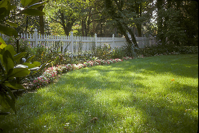 [Leachman Garden]: perennial border with lambs ears and asters.