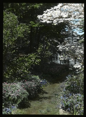[Ferncote] [slide]: perennials and dogwood trees in spring