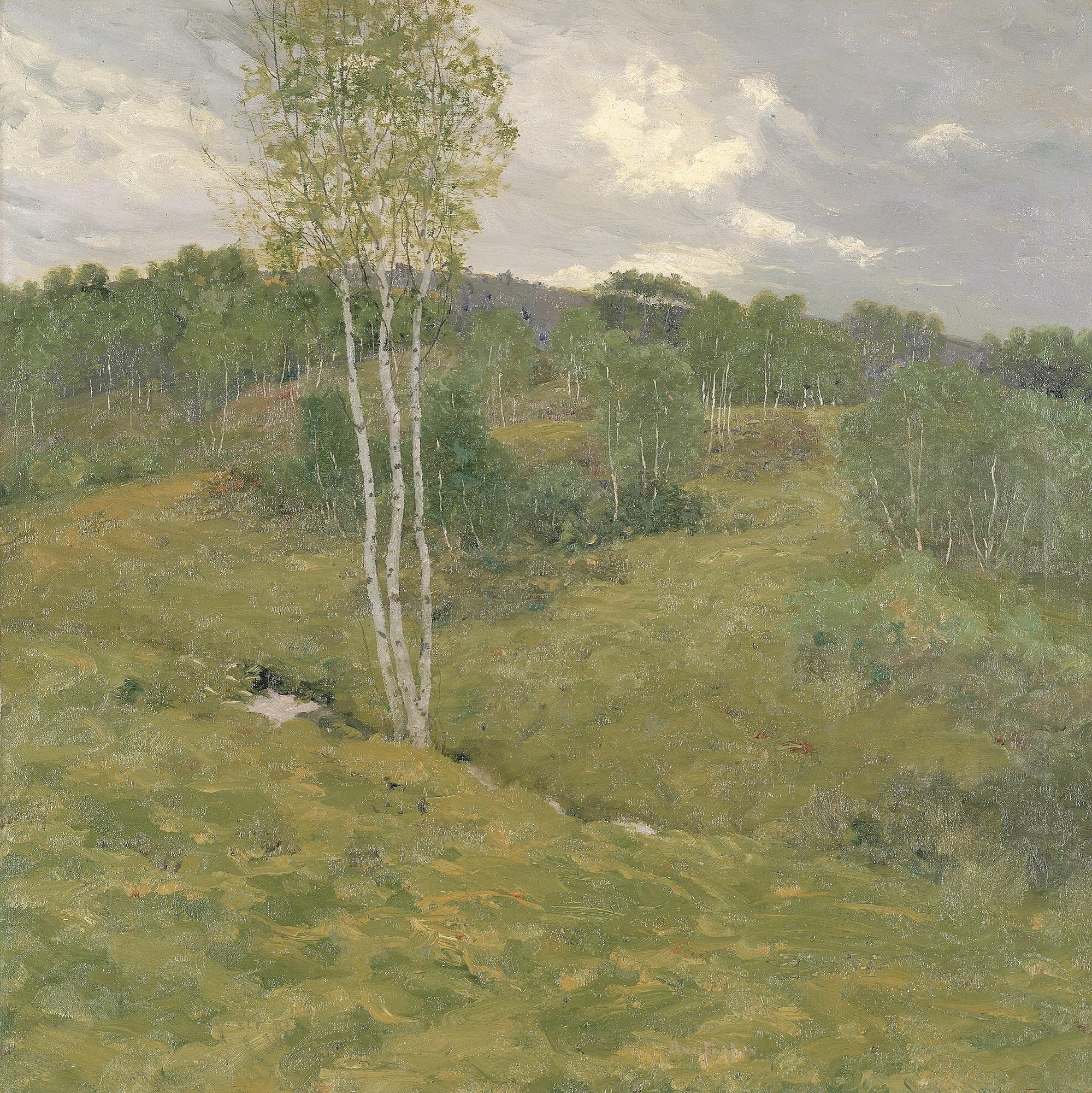 Birch-Clad Hills