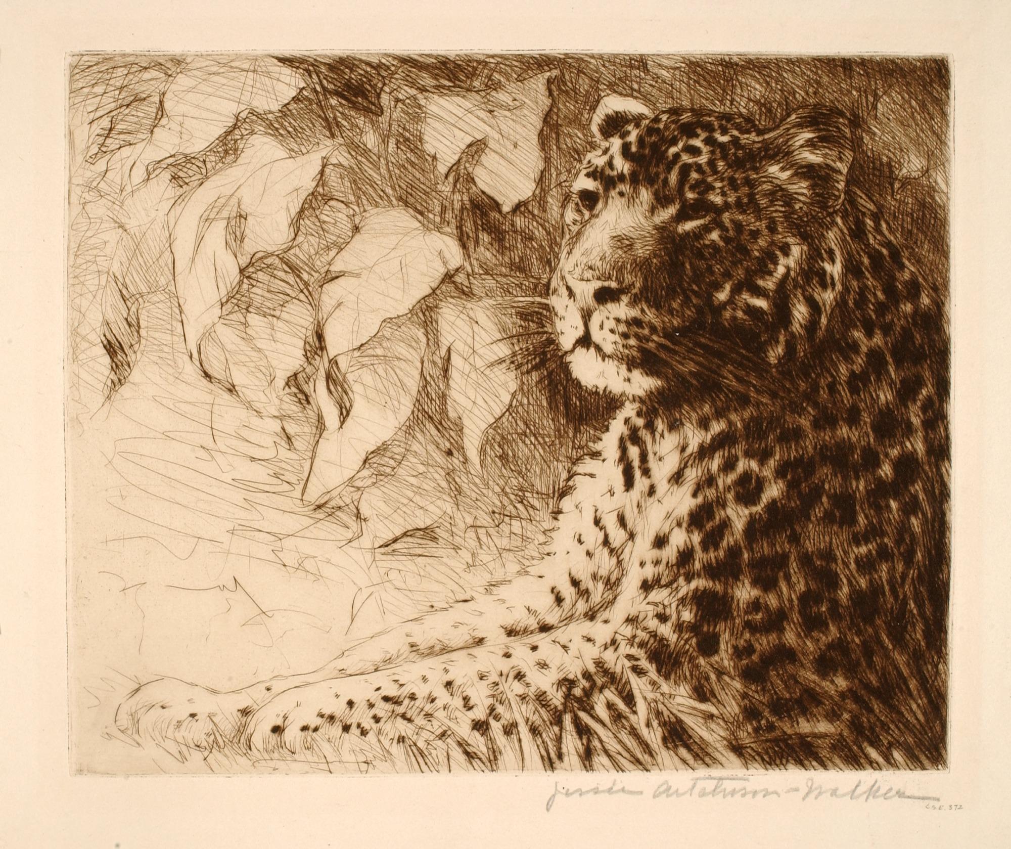 images for Leopard