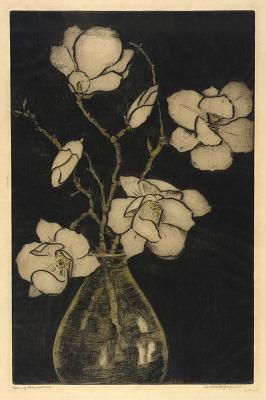 Spring Blossoms (Tree Magnolia)