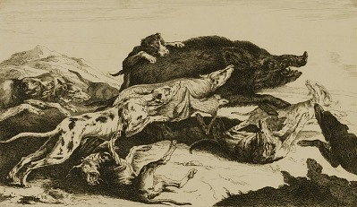 Dogs Attacking Boar