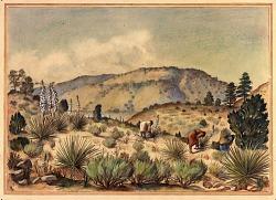 Women Gathering Yucca Plants