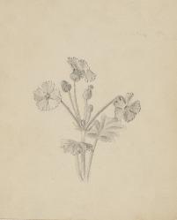 (Untitled--Plant Study)