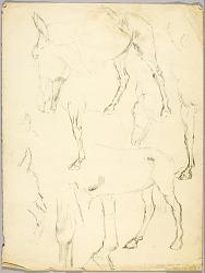 Portrait Study, Horse Study