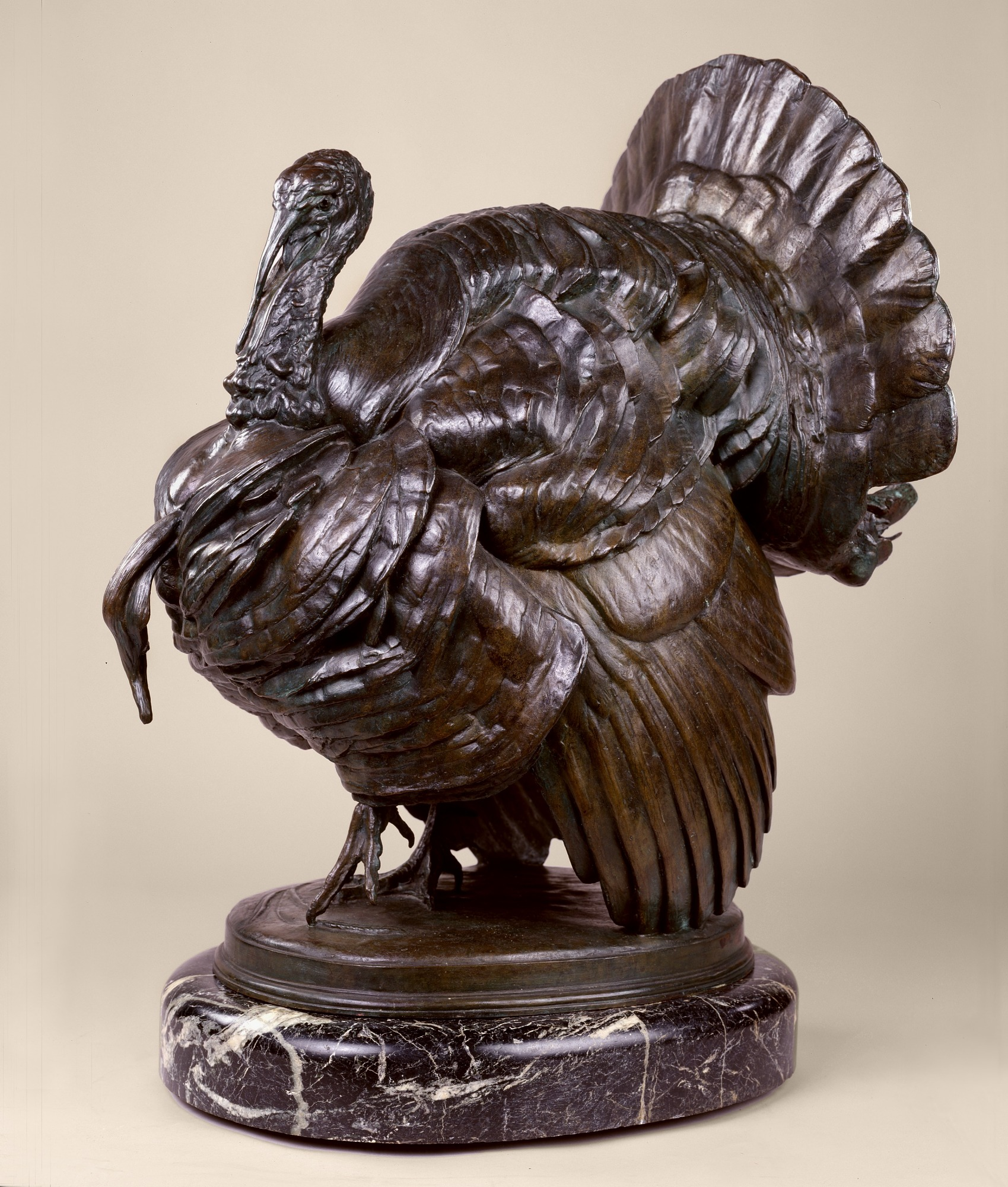 images for Bronze Turkey