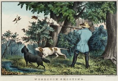 Woodcock Shooting
