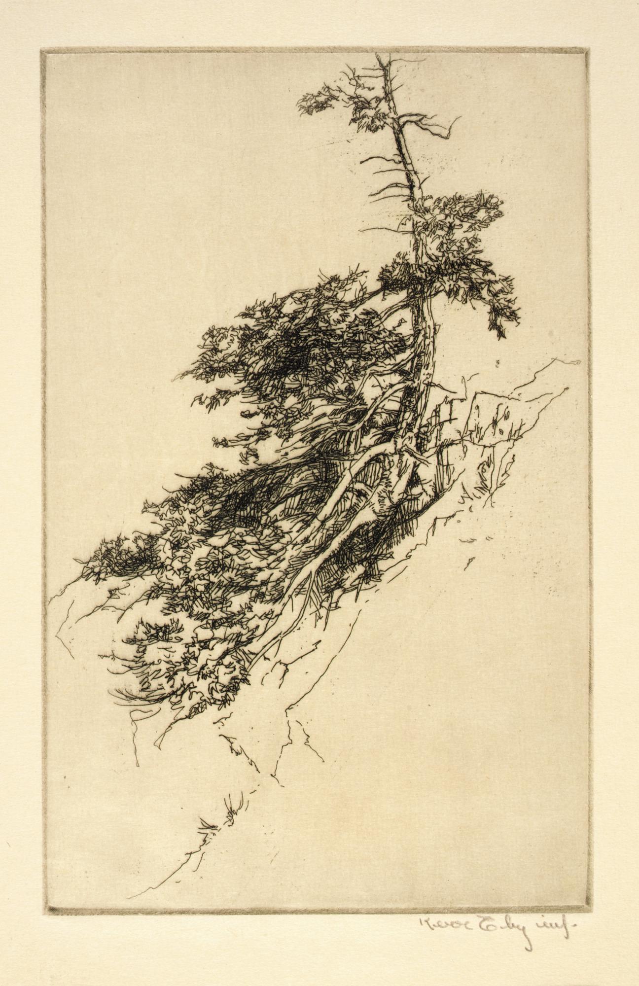 Little Rock Pine