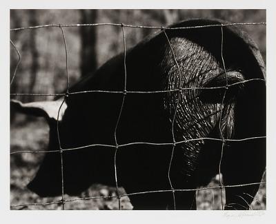 Hog End, from the Ozark Portfolio